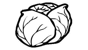 choux blancs émincés, choux rouges émincés, légumes de 4ème gammes