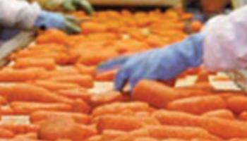 Hauts Villiers - contrôle des légumes 4ème gammes